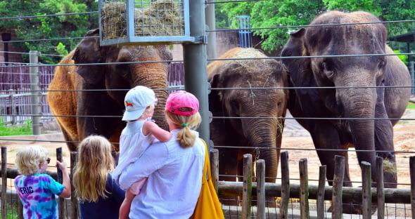 Visitor feedback on zoo animals